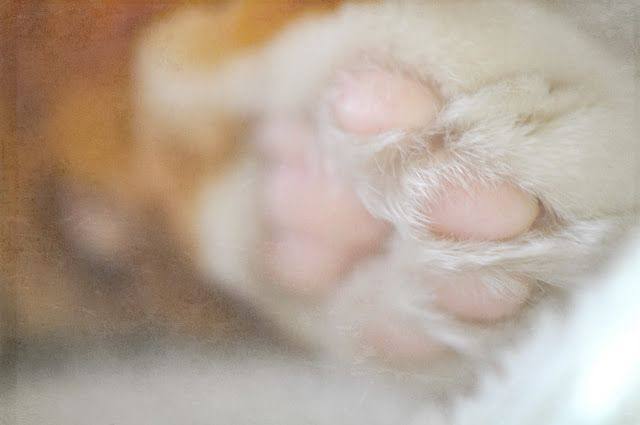 pink kitty toes