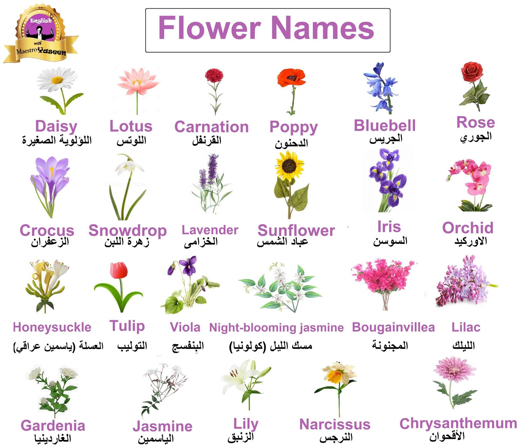 Learning Arabic Msa Fabiennem Flower Names Flowers English Language Learning