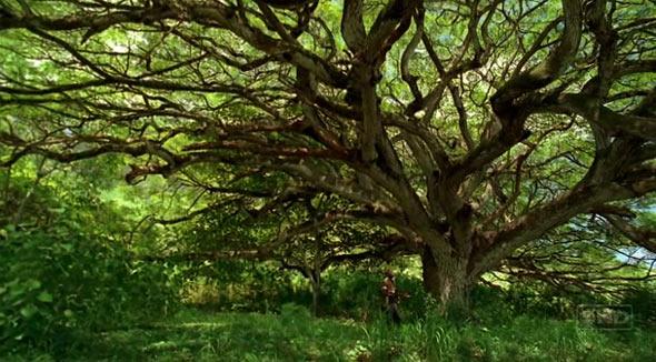 El Jardin Del Eden En La Vida Real Búsqueda De Google Tree Plants Tree Trunk