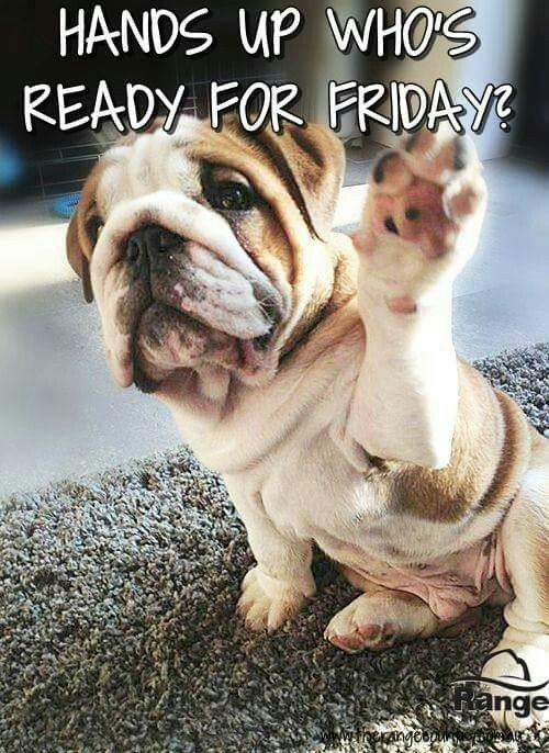Hands Up Who Is Ready For Friday Friday Happy Friday Tgif Good