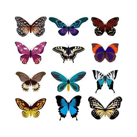 'Big Collection Butterfly of Colorful Icon Set. Art Butterflies Isolated on White. Vector Illustrati' Art Print - SVStudio | Art.com