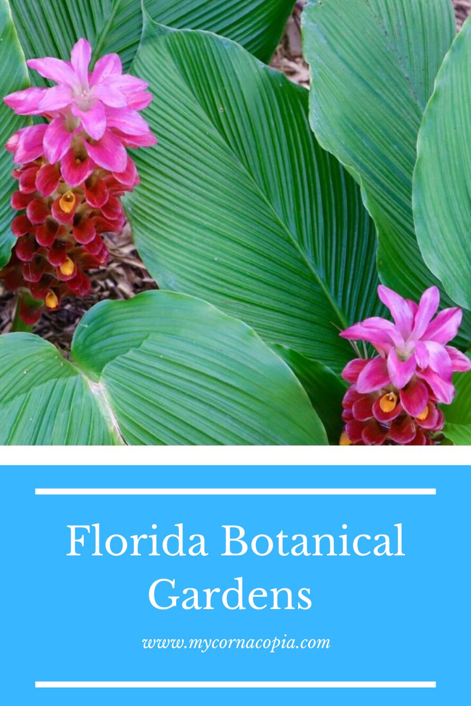 0d8a291be46d3335961b9b6e0465c4d5 - The Florida Botanical Gardens In Largo