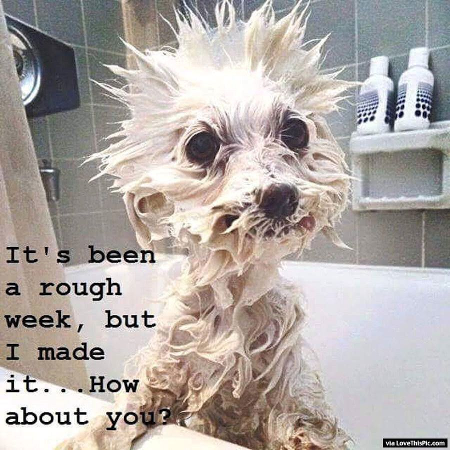 Its Been A Rough Week But I Made It Through | Cute baby animals, Funny  animal pictures, Cute animals