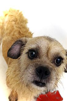 Pin On Ny Nj Little Paws Small Breed Dogs In Need Of Foster