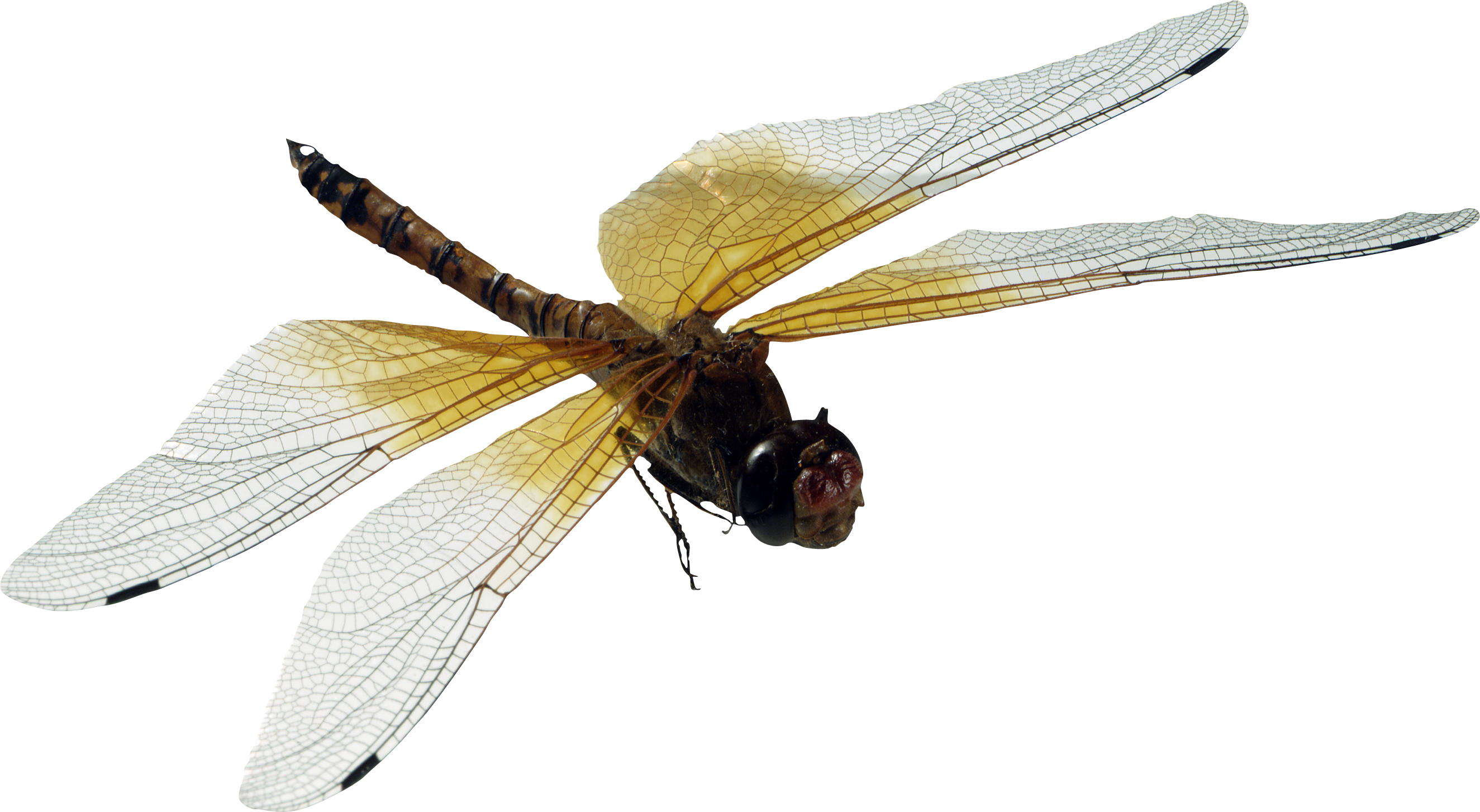 Dragonfly Png Image Dragonfly Insects Animals