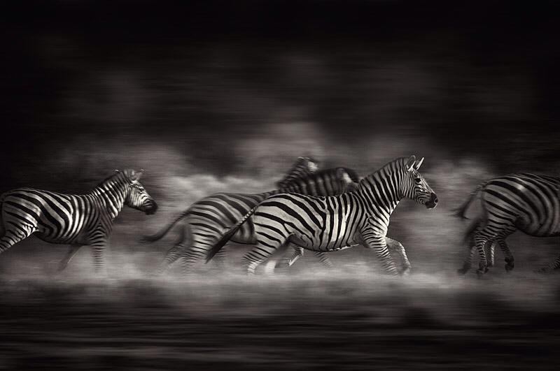 © Alex Bernasconi