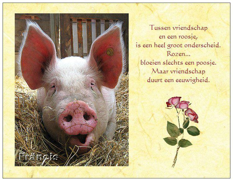 http://fmlkunst.home.xs4all.nl/varkenskaarten1/varkenskaarten1.htm - roosje