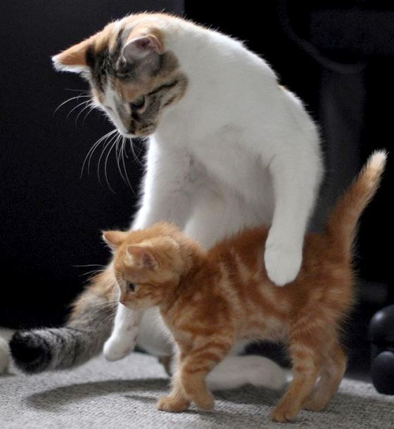 Alice the cat teaches ginger kitten to walk ~ Check out this site, it will bring tears to your eyes. Such heart warming stories!