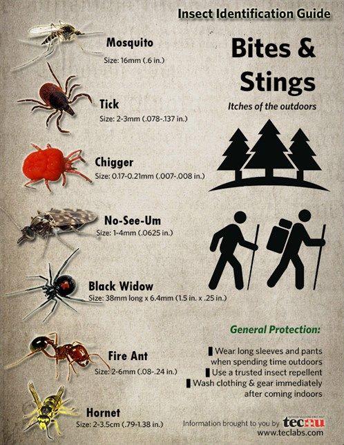 The 25 Best Spider Identification Ideas On Pinterest