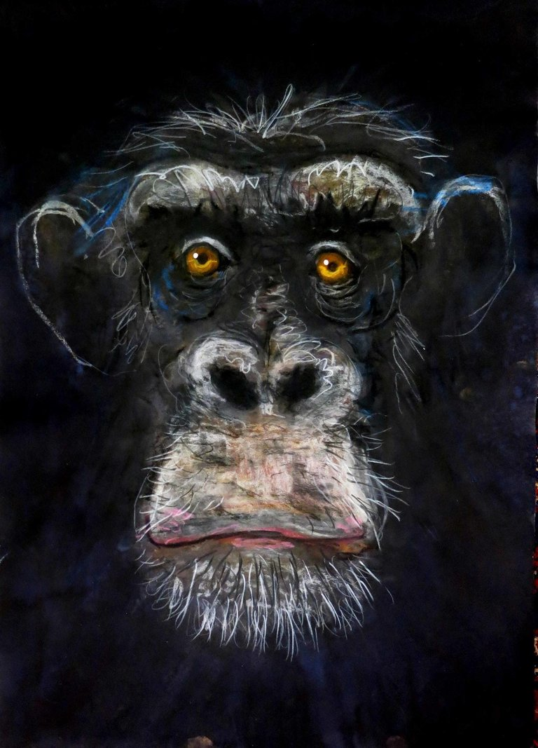 John Graham Chimpanzee New Animal Study By John Graham 2018 in