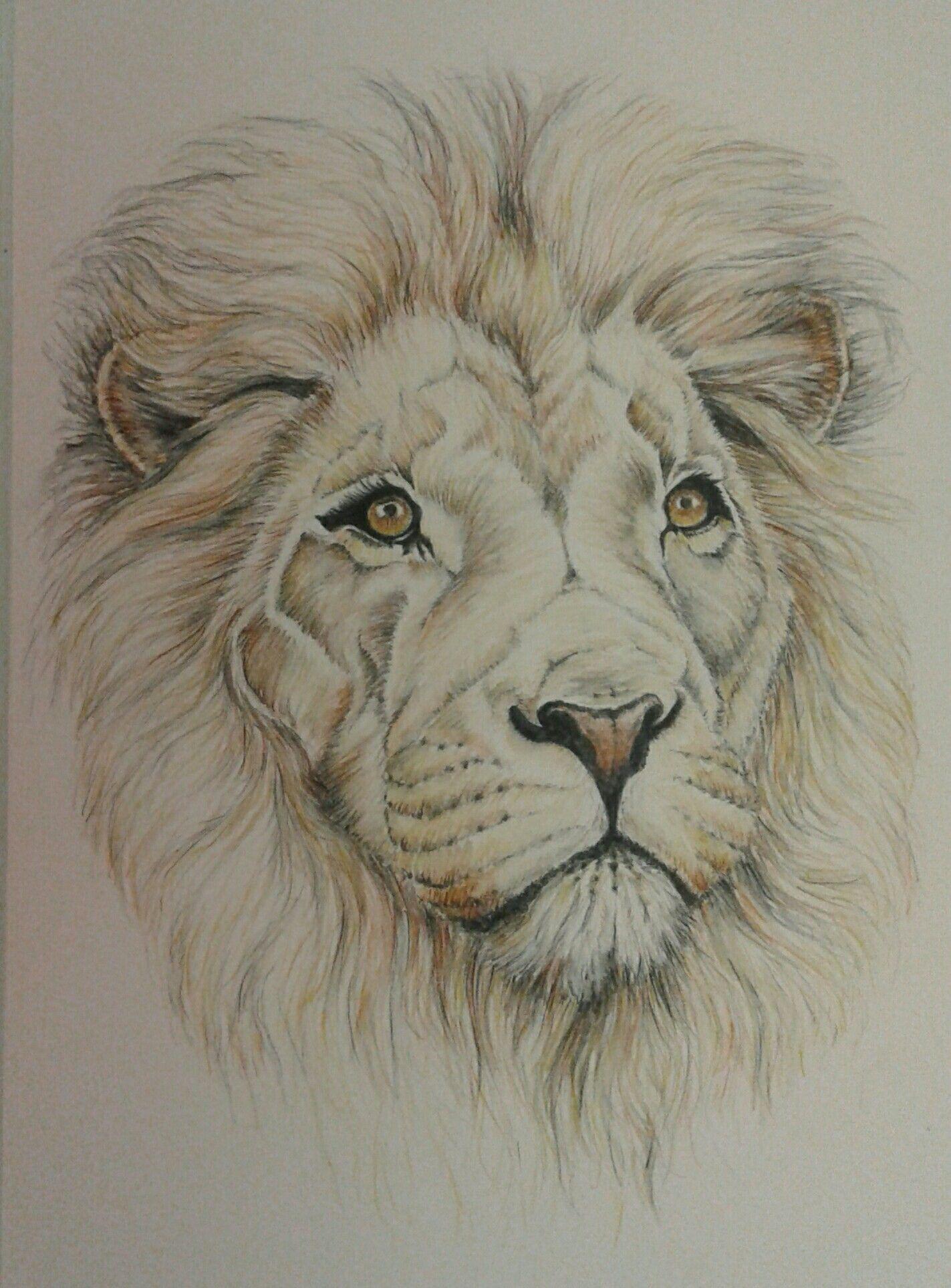 Простая картинка льва