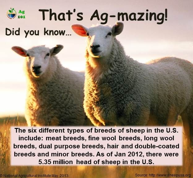 Sheep Breeds Infographic from Ag101 | This is my way of life