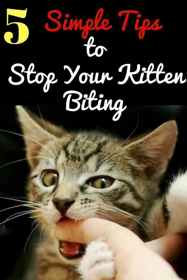 Understanding Your Cat S Behavior In 2020 Kitten Biting Cat Biting Buy A Kitten