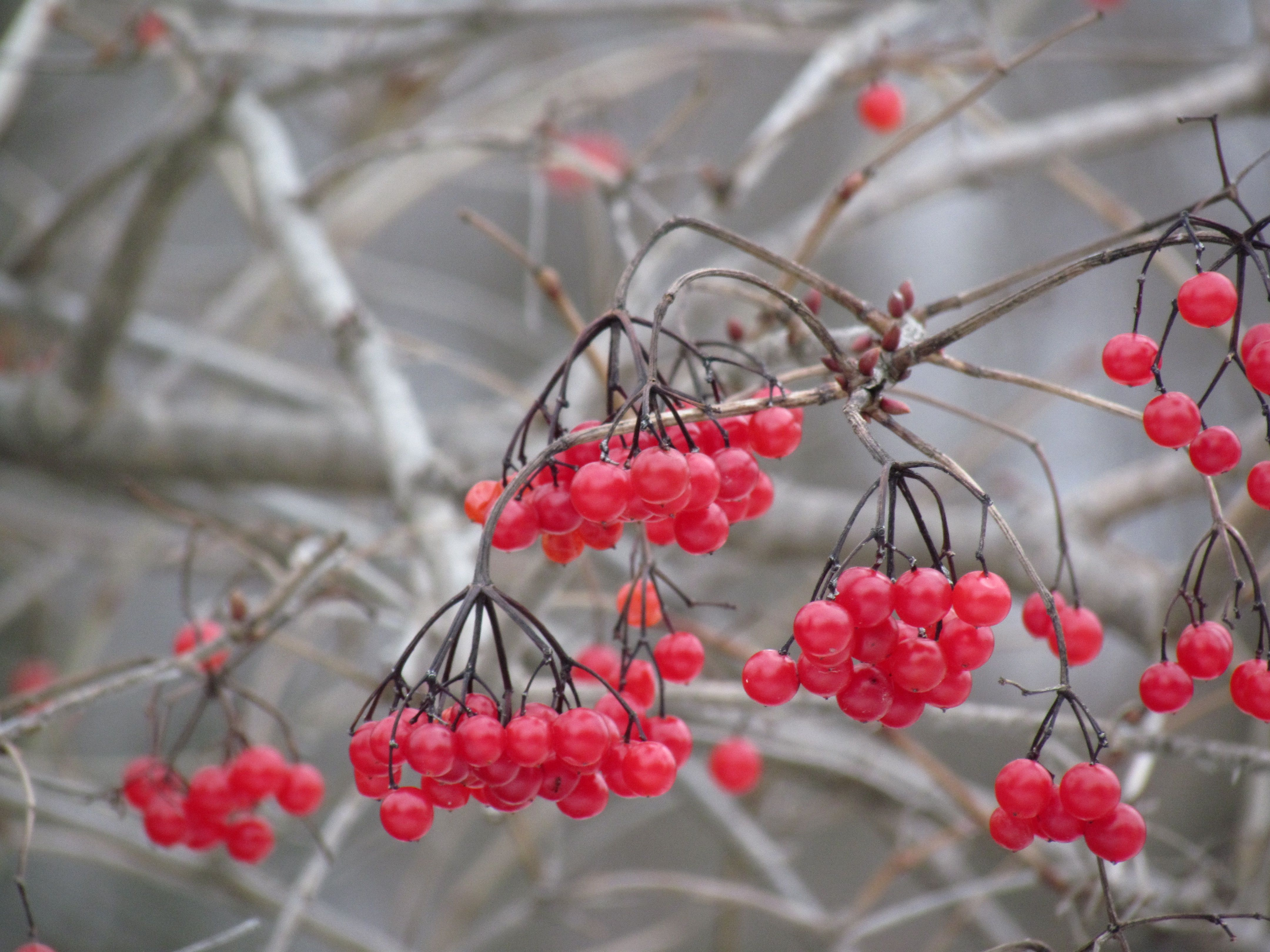 Beautiful contrast of red to grey. #nature #photography