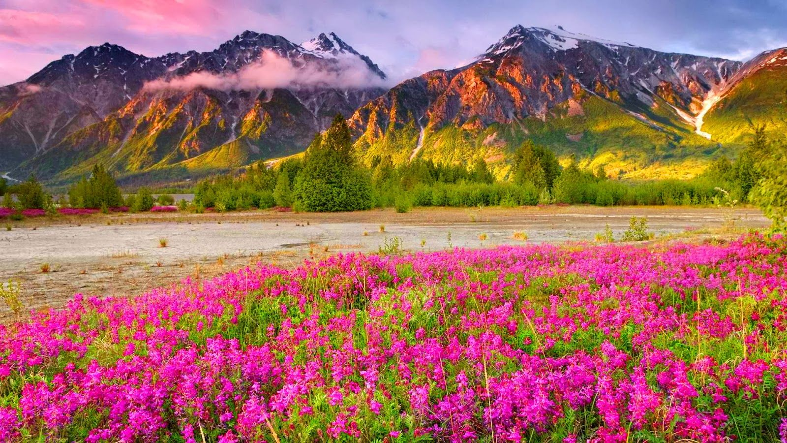 The most beautiful scenery wallpapers that you will simply for Beautiful flower landscapes