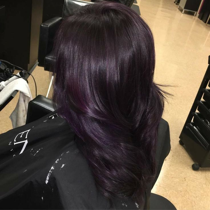 New Plum Black Hair Color