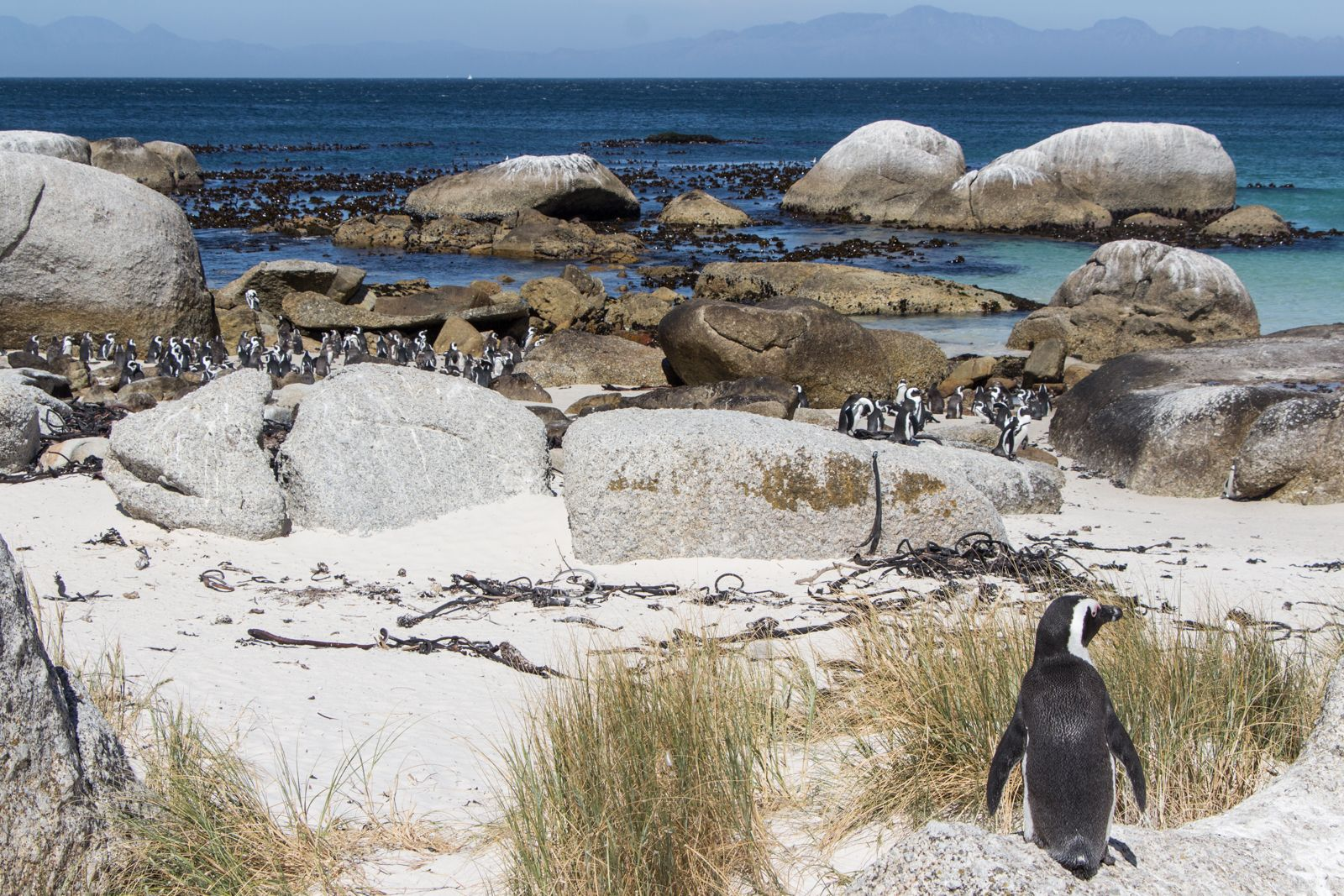 boulders-beach-pinguine-1