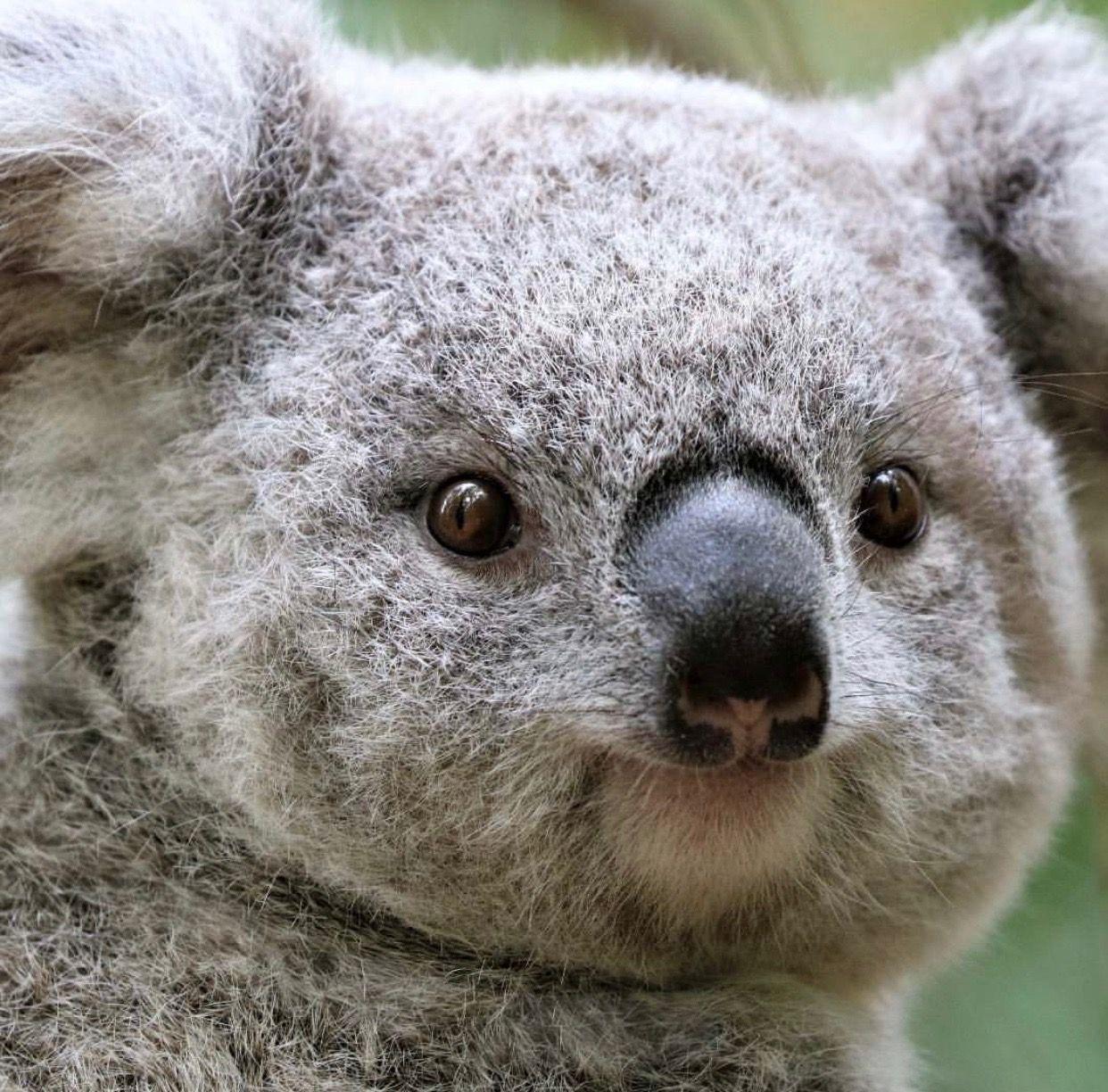 Pin Von Yato Auf Animals Susse Tiere