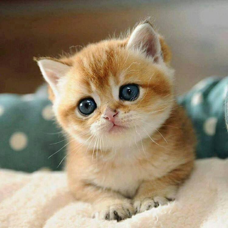 pin de carmen avenda o en beb s bonitos pinterest gato