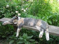 Lustige Tiere mehr auf http://www.fails.ch Benched - Pixdaus -
