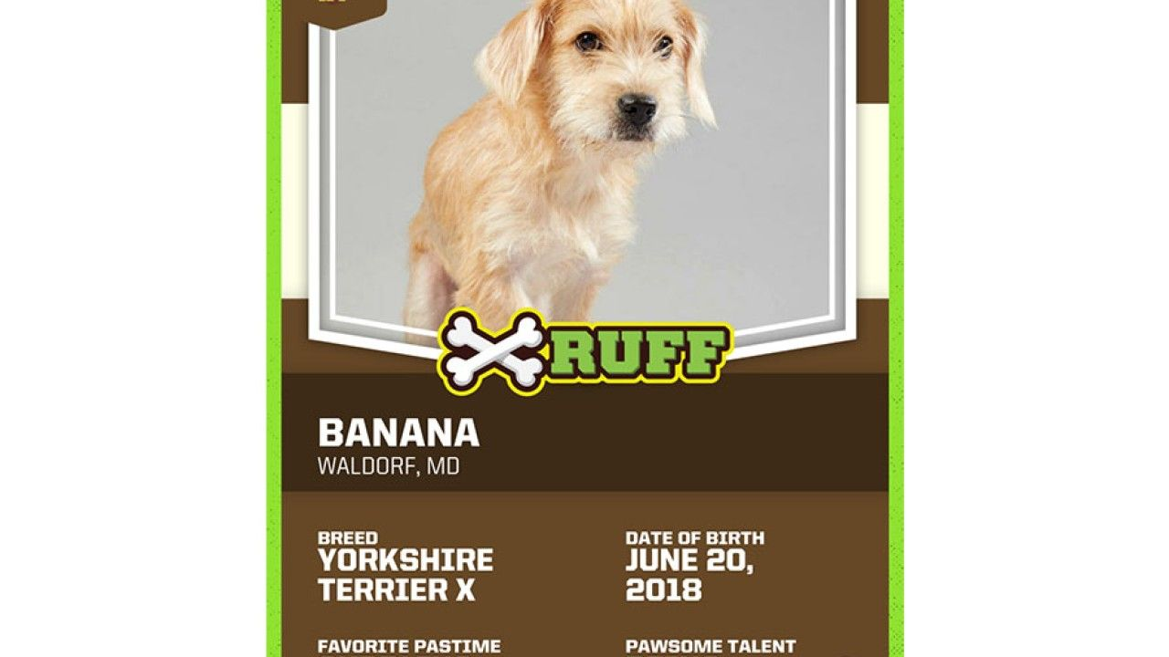 Md Pup To Be Featured In 19 Puppy Bowl Puppy Bowls Puppies Pup