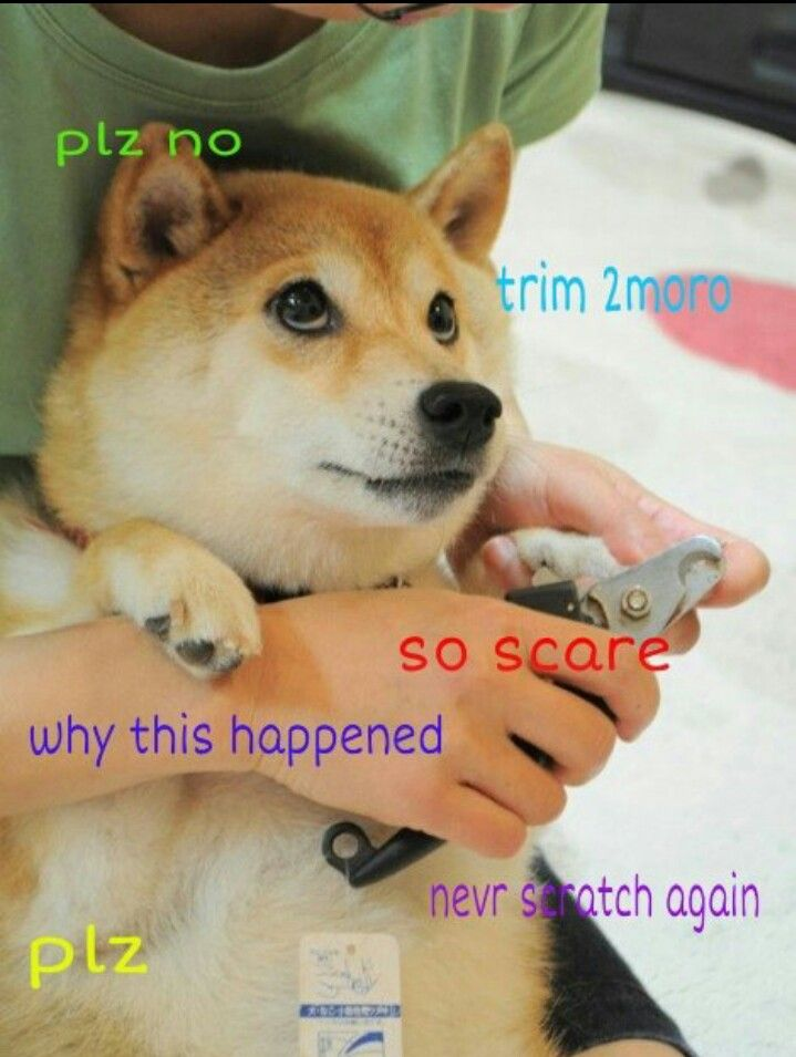 Doge omg abram goglanian medley bobby was telling me about this dankest memes solutioingenieria Choice Image