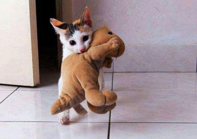Kitty vs t-rex