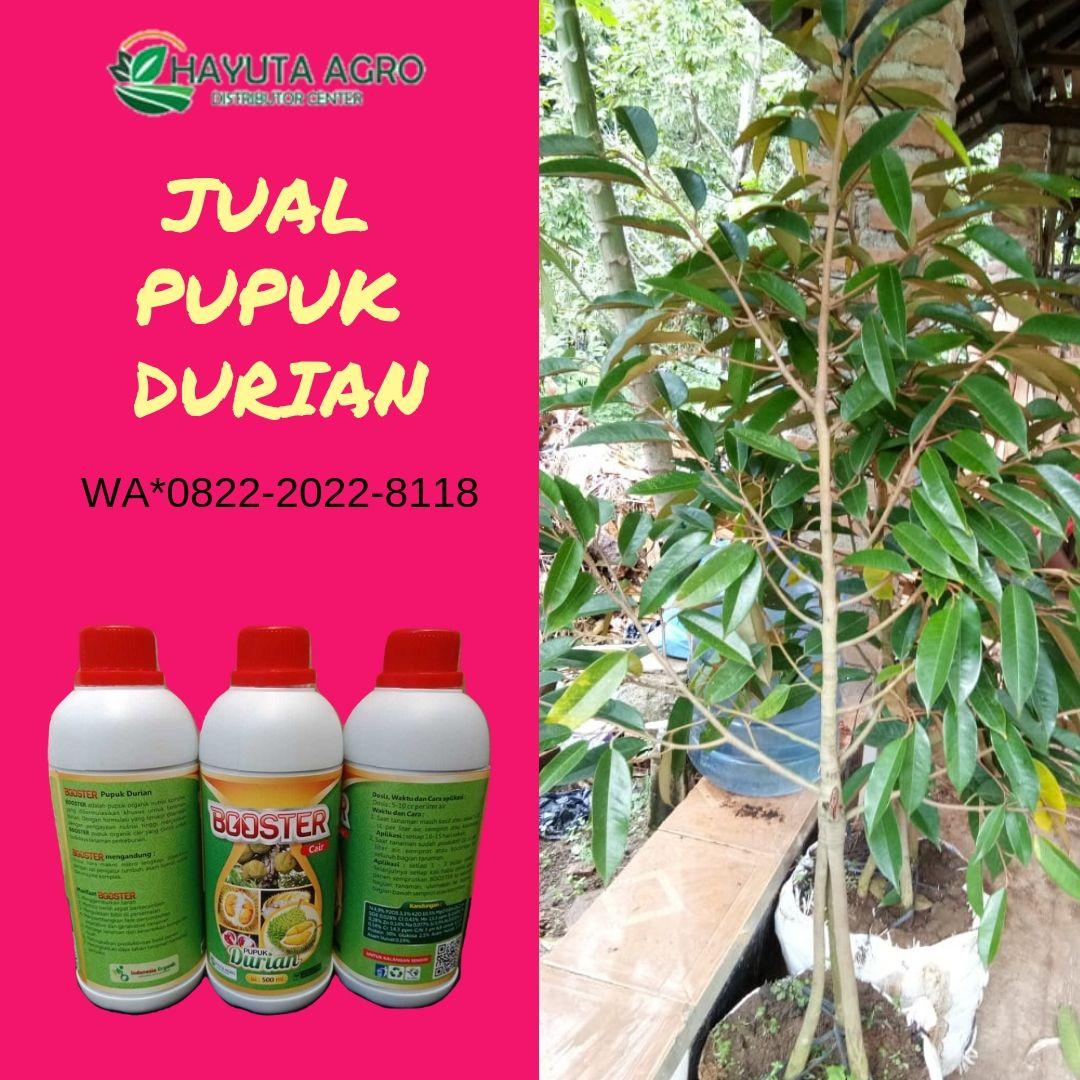 Terbaik Wa O822 2o22 8ii8 Jual Pupuk Durian Di Muara Enim Harga Pupuk Durian Di Empat Lawang Buah Manis Pupuk Organik