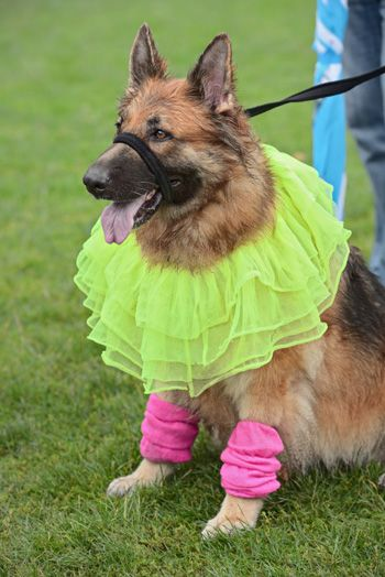 Dress Up Your Pooch For Less Halloween Costumes German Shepherd