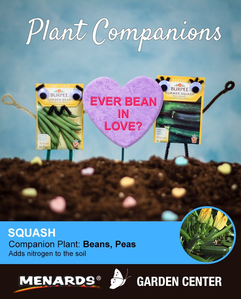 Get More From Your Garden With Companion Planting At Menards Companion Planting Celery Plant Plants