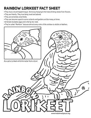 Lorikeet Color In Fact Sheet Coloring Pages Printable Coloring
