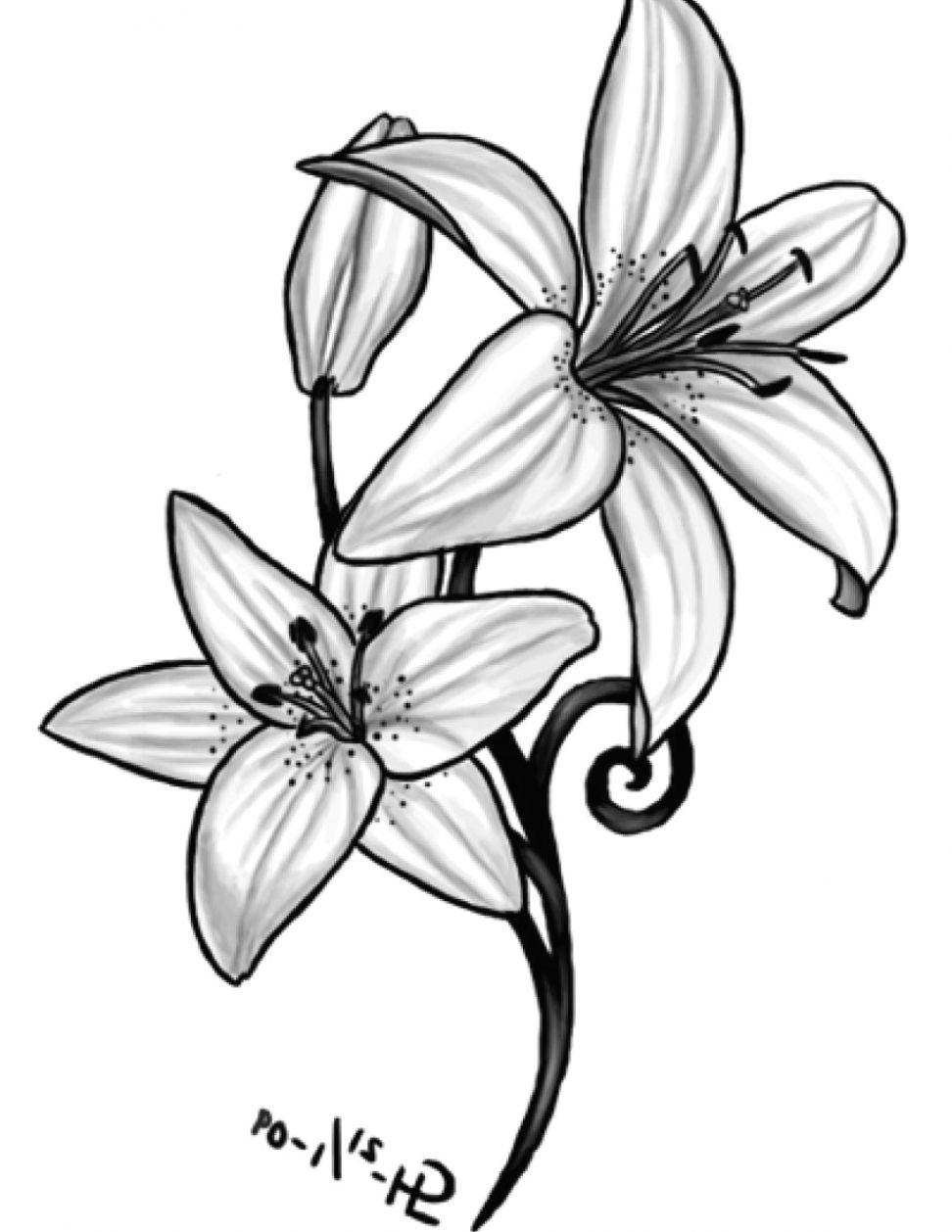 Tiger Lily Flower Drawing   PeepsBurgh