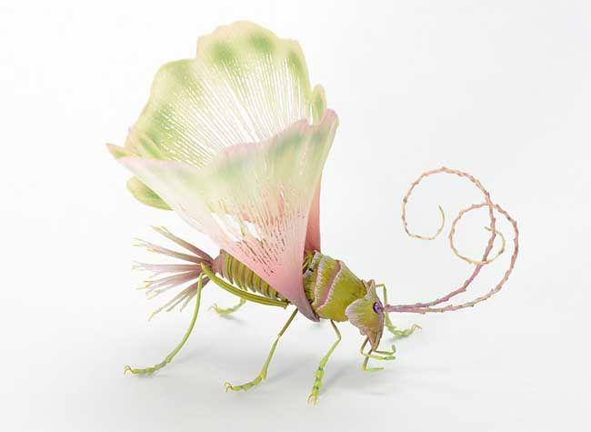 Liliopsidea Insecta, el insecto Flor. 0d918e416542bbadba1e6bb3e7483296
