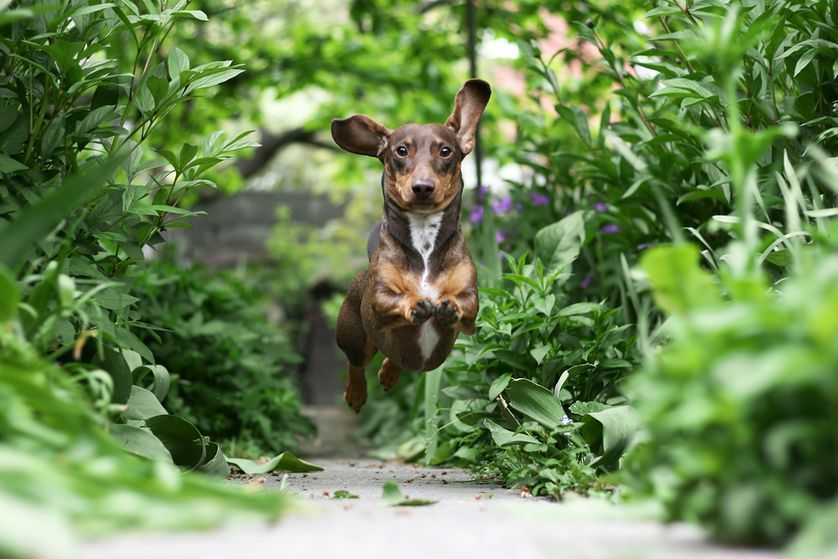 Small Backyard Ideas for Dogs