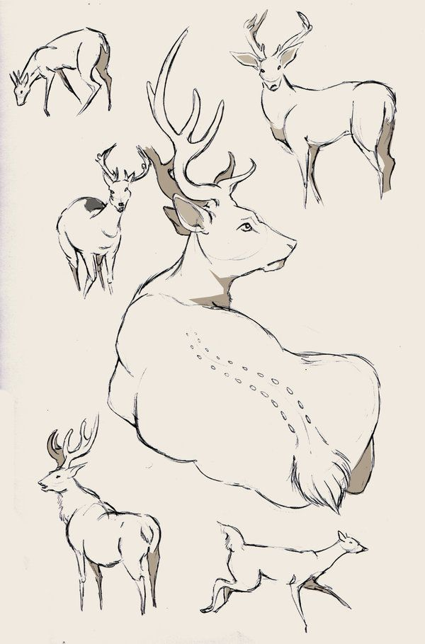 Deer study again by WolfSkullJack on DeviantArt | line and sketches ...