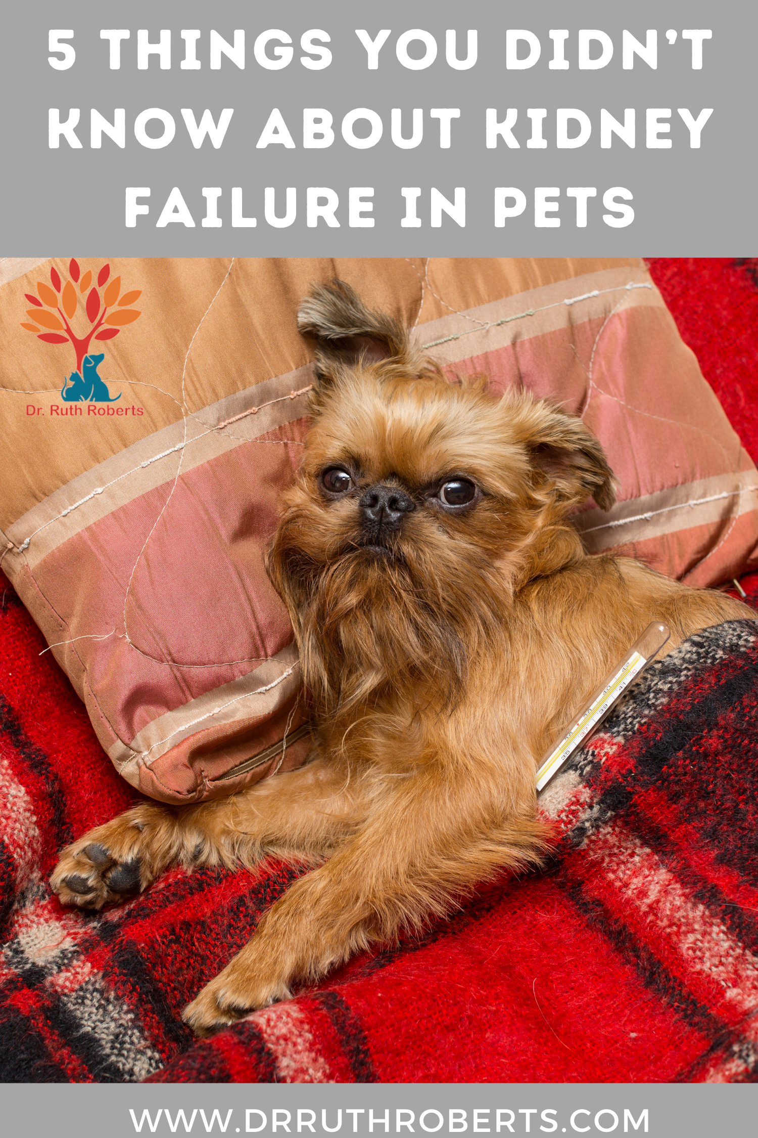5 Things You Didn T Know About Kidney Failure In Pets Dr Ruth Roberts Kidney Failure Pets Pet Care