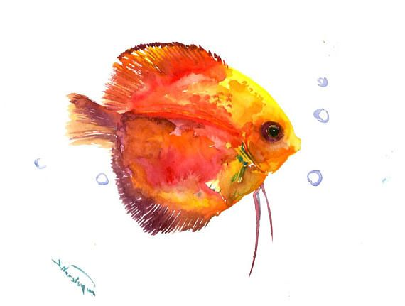 Red Yellow Discus Original Watercolor Painting 9 X 12 In Red