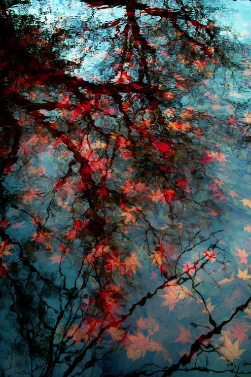 Autumn cuadro plantas