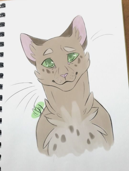 pinterest warrior cats cat and animal