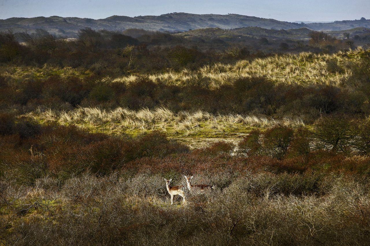 foto: olivier middendorp