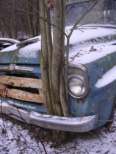 Abandoned car, reclaimed by tree