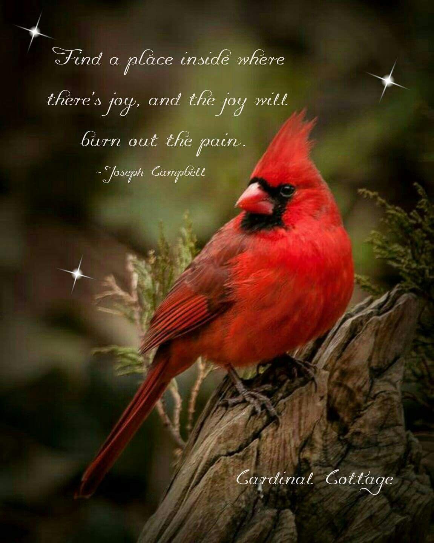 Pin de Gracie Gulyas en Cardinals | Pinterest | Pensamientos y Frases