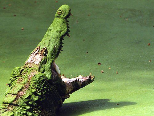 Pin Von Sonnen Weg Auf Nature Ausgestopftes Tier Tiere Wild Kakadu