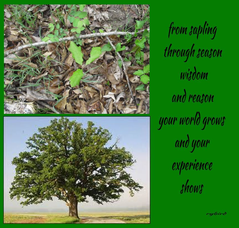 Short Poem About Nature And Growth Short Poems About Nature
