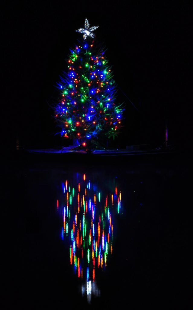 lights on a tree on a lake
