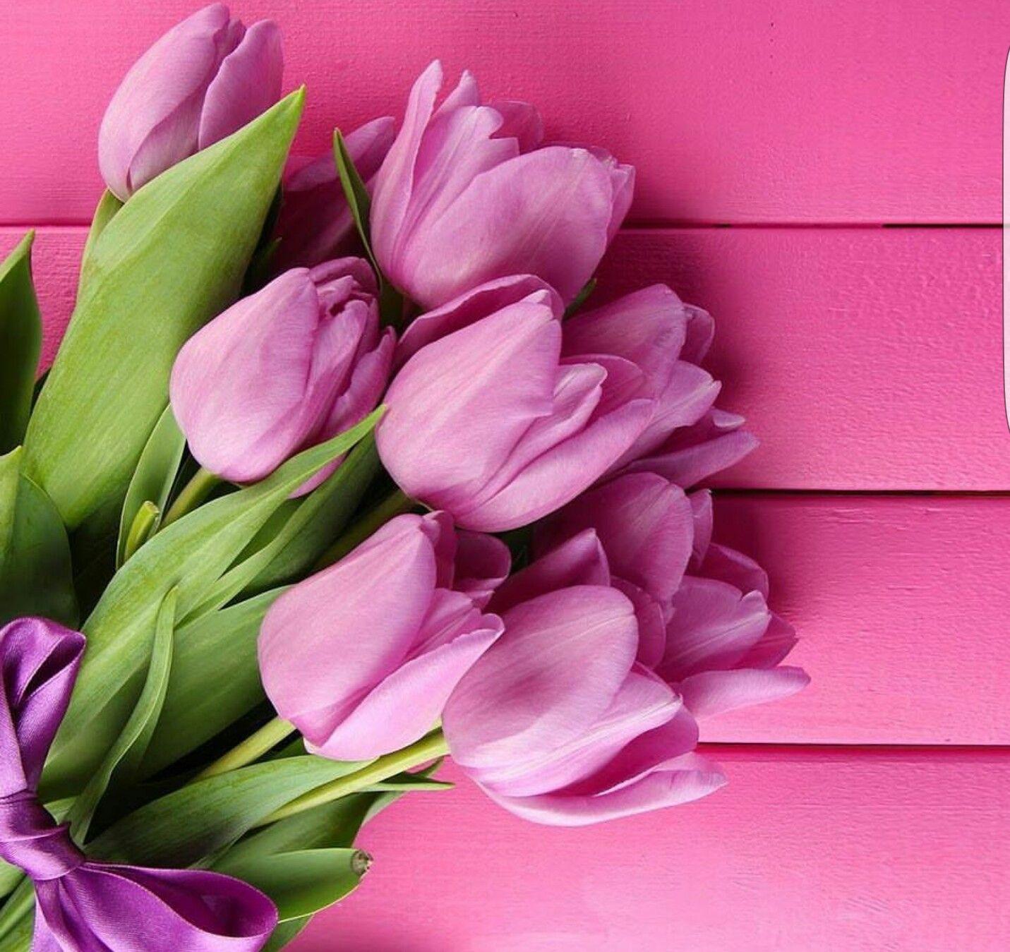 Tulips Flowers Pinterest