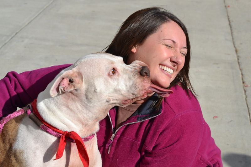 Adopt Snickers on Animals, No kill animal shelter, Adoption