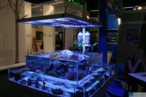Aquariums saltwater fish tank fish tanks pinterest for Rundes aquarium