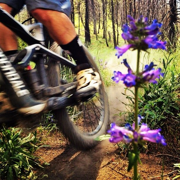 Ripping The Fox Peak Trail In Sun Valley Idaho On The Cannondale Jekyll All Mountain Bike Cannondale Mt Bike