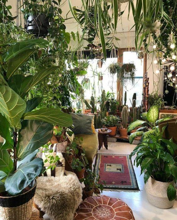 FOCUS ON: HOUSE PLANTS